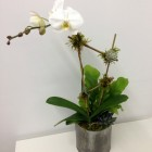 Single Stem White Orchid Plant with Succulents and Green Plant Blank Slate Events Floral Designer
