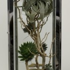 Tall Over Sized Terrarium
